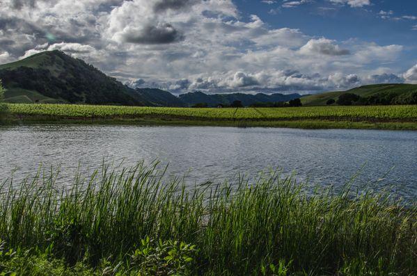 Napa Valley Vineyard thumbnail