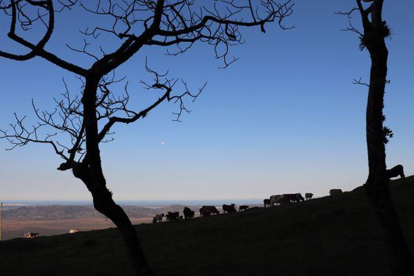 Field silhouette thumbnail