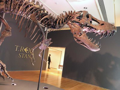 """The skeleton of a T. rex known as """"Stan"""" is displayed in a gallery at Christie's auction house in September in New York City."""