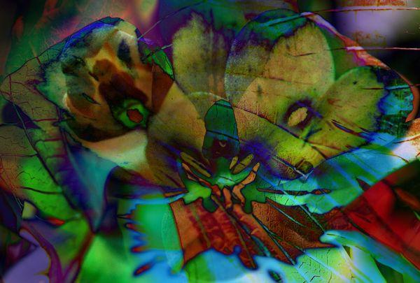 Orchid Face Fusion thumbnail