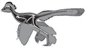 20110520083150anchiornis-restoration-300x169.jpg