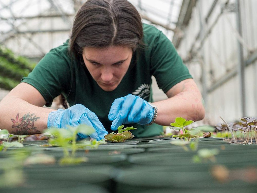 A horticulture student tending to plants
