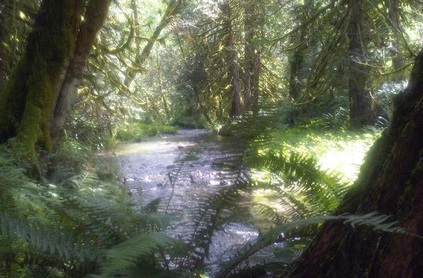 Speelyai. Creek while on a walk bridge near Ariel Washington  thumbnail