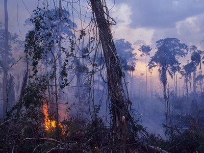 Damages wrought by climate change and deforestation have transformed the Amazon rainforest. New research suggests the changes to this icon of the natural world caused by human activity may mean the Amazon now emits more greenhouse gases than it absorbs.