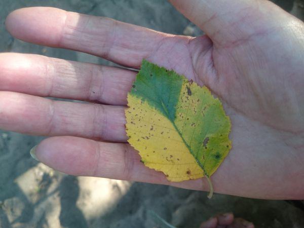 The Leaf thumbnail