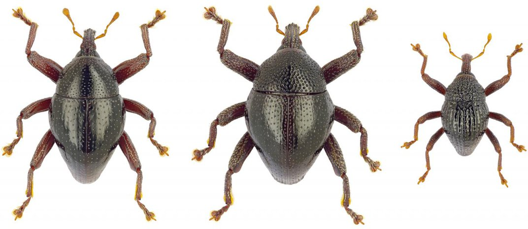 These 103 Beetle Species Have a Mix of Pop Culture-Inspired Names