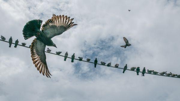 Three birds flying thumbnail