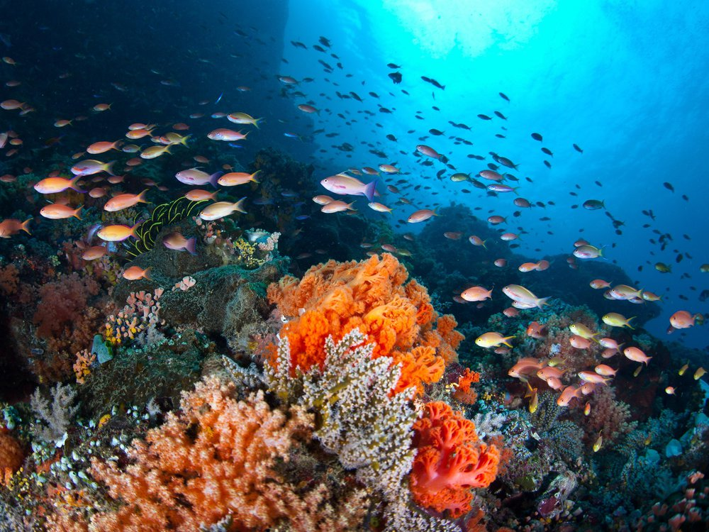 Marine heatwaves can kill off species and alter ecosystems.
