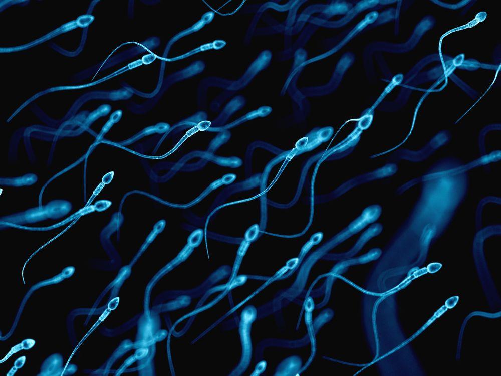 flock of sperm