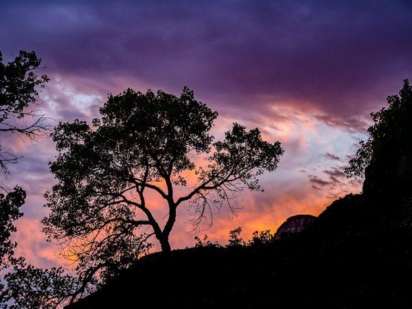 Awakening - A glorious sunset in Zion National Park thumbnail