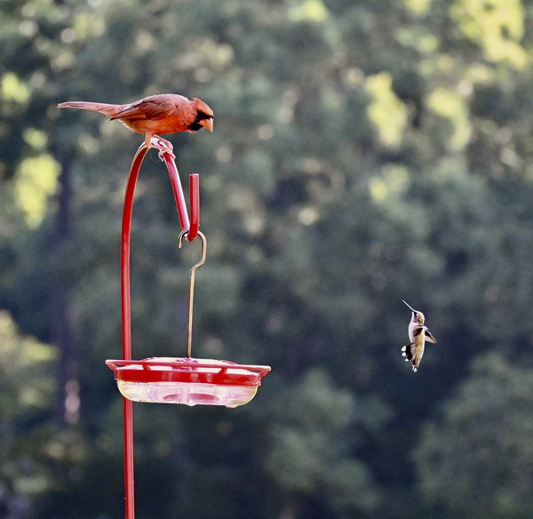 Back yard bird feeder thumbnail