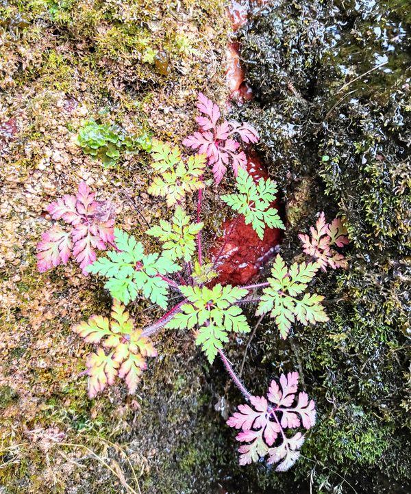 Multicolored flower thumbnail