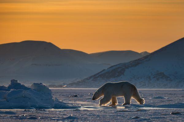 Polar Bear's Realm thumbnail
