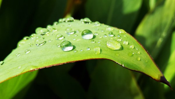Raindrops on a leaf thumbnail