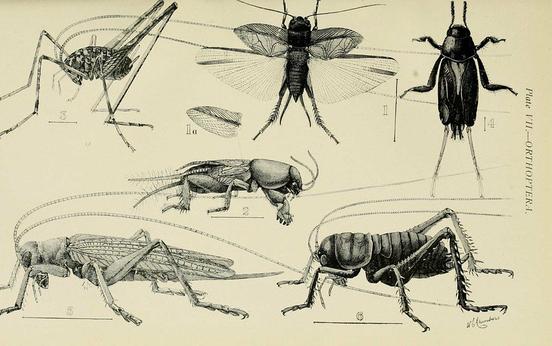 You Can Now Download 150,000 Free Illustrations of the Natural World