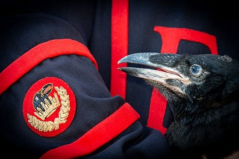 Tower of London Welcomes Baby Ravens for the First Time in 30 Years