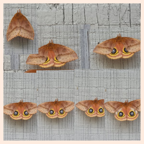 Moth showing his secret thumbnail