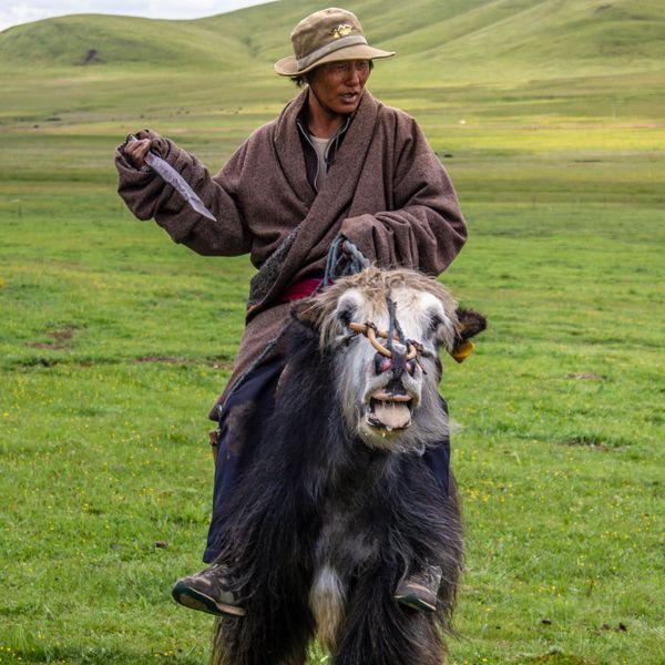 Henan Herder thumbnail