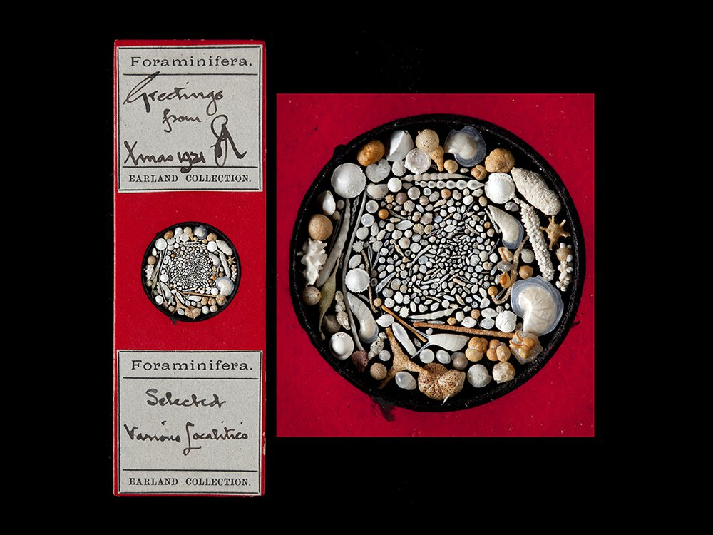 red Christmas fossil card 1921