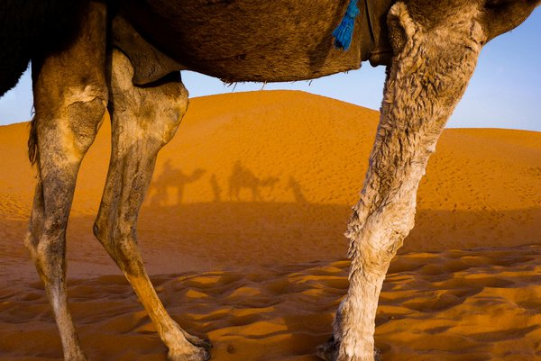 Sahara desert thumbnail