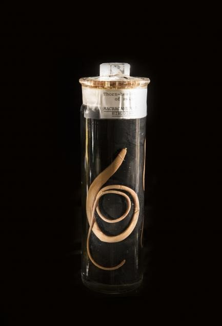 A beige worm in a clear glass jar on a black background.