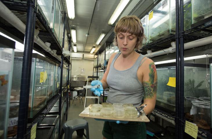 Kathleen Higgins at Gamboa Amphibian Rescue and Conservation Center. Credit: Sean Mattson