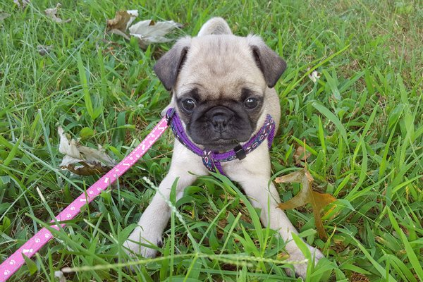 Gracie playing in the grass thumbnail