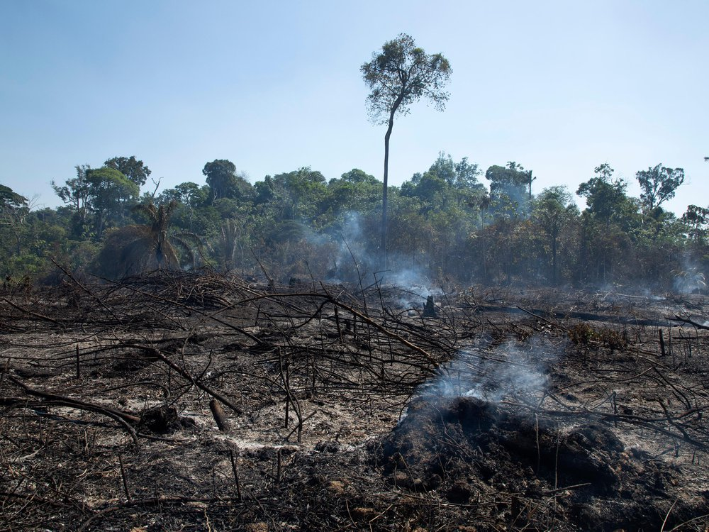 Burnt landscape in foreground with rainforest intact in the background