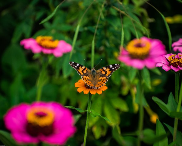 Butterfly in the garden thumbnail
