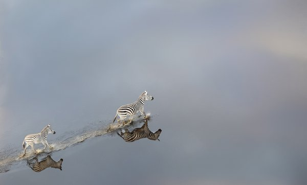 Zebra crossing wetland thumbnail