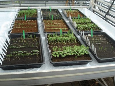 Plants growing in lunar and Martian soil simulants.