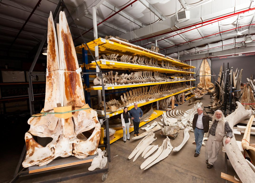 For Scientists, Chunks of Whale Earwax Can Be Biological Treasure Troves