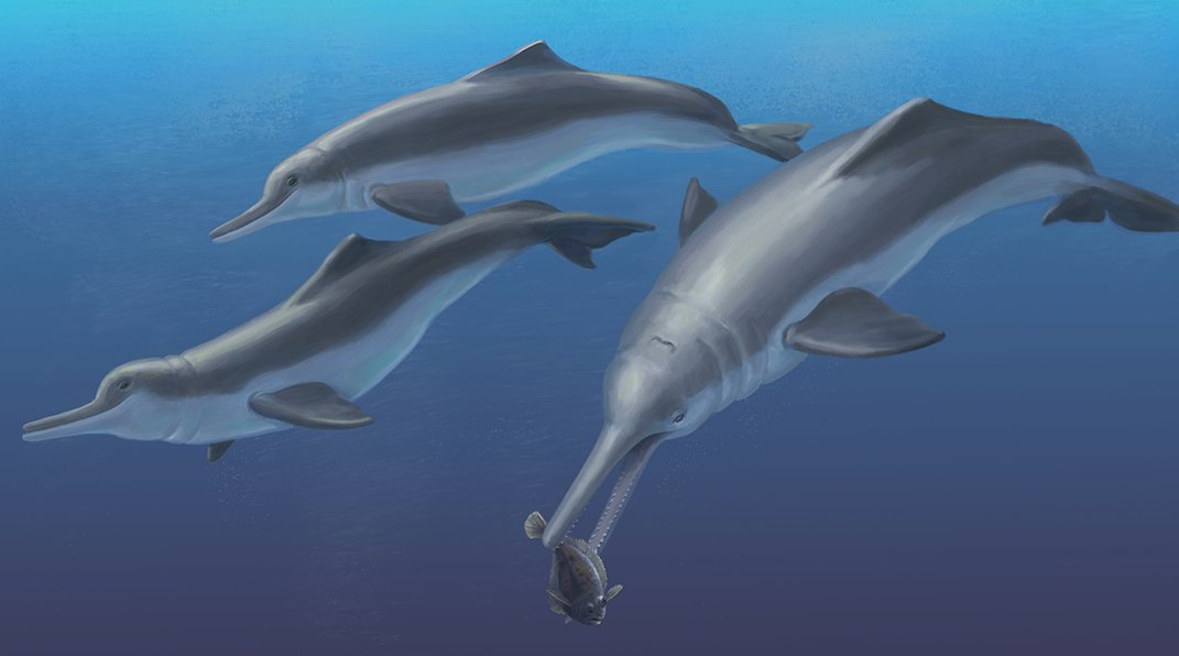 New Species of Ancient Dolphin Shows How the Animals Moved From Seas to Rivers