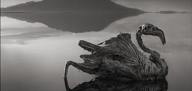 A calcified flamingo, preserved by the highly basic waters of Tanzania's Lake Natron and photographed by Nick Brandt