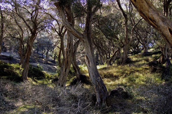 Olivegarden near Kanakades (Corfu) thumbnail