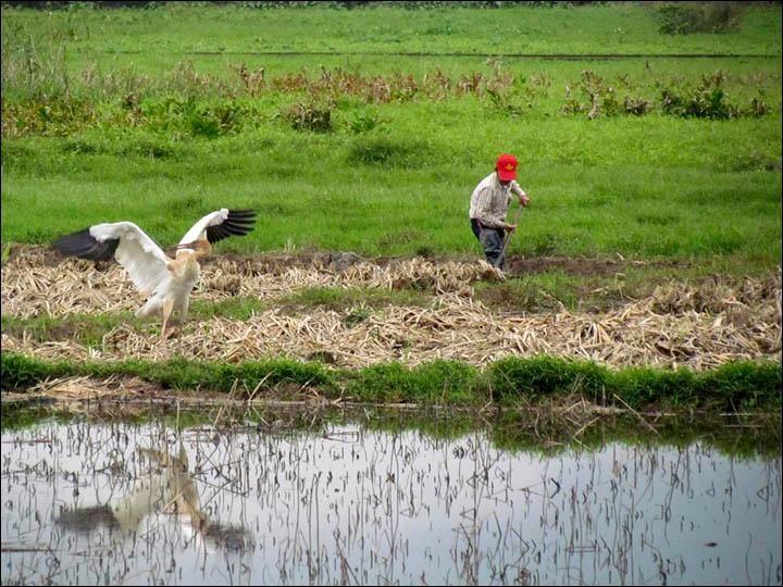 Crane with Farmer