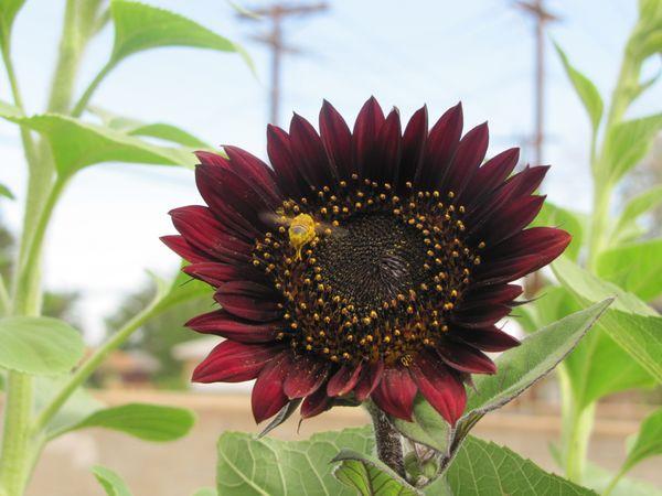 Messy Bee thumbnail