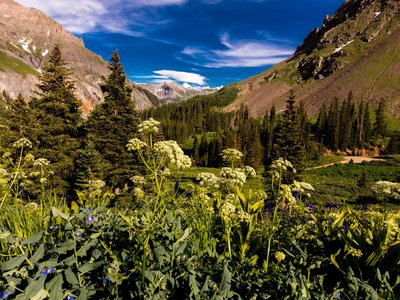 A poem providing clues to the location of a treasure chest filled with gold and jewels inspired thousands to search the Rocky Mountains.