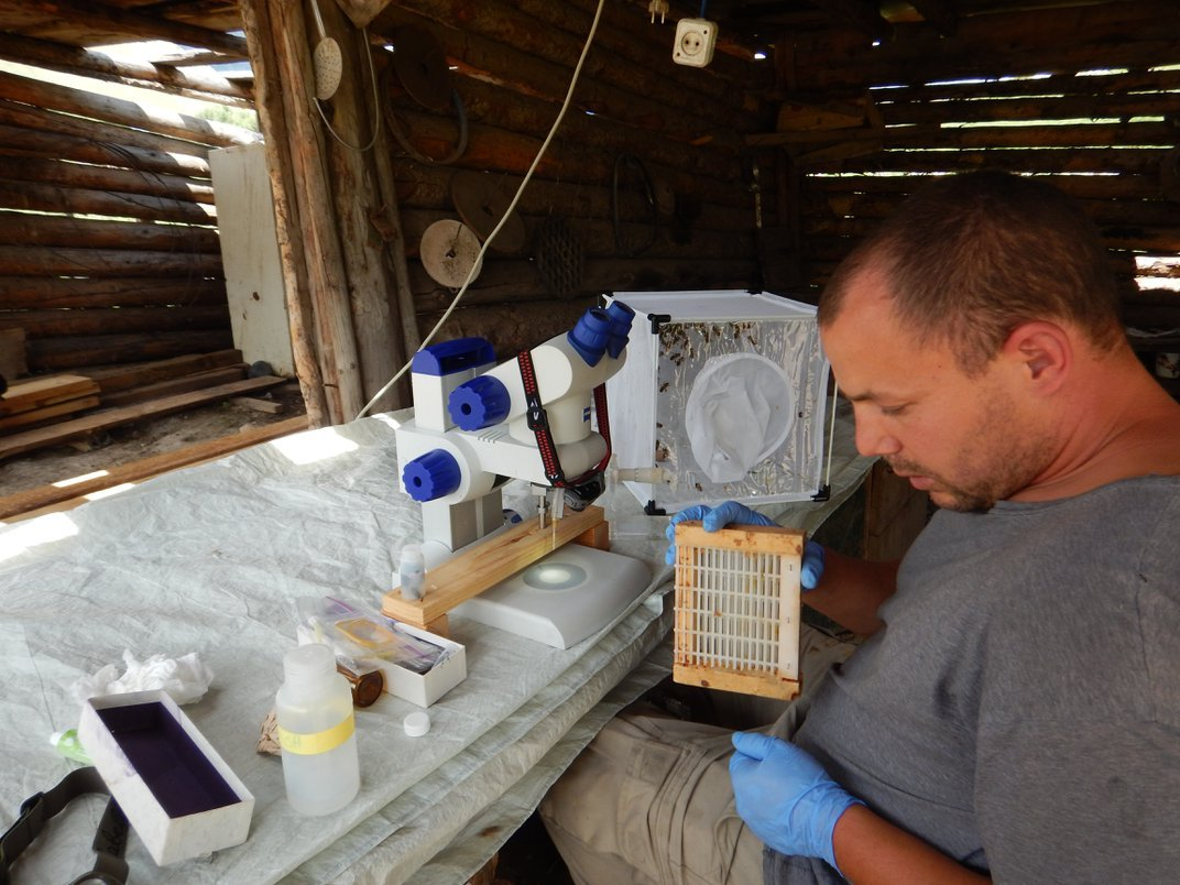 Is the Key to Saving Pollinators … Honey Bee Semen?