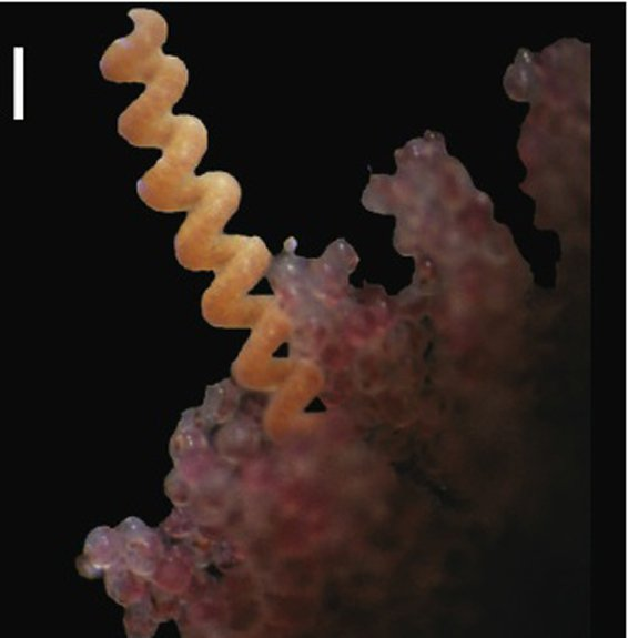 14 Fun Facts about Marine Ribbon Worms