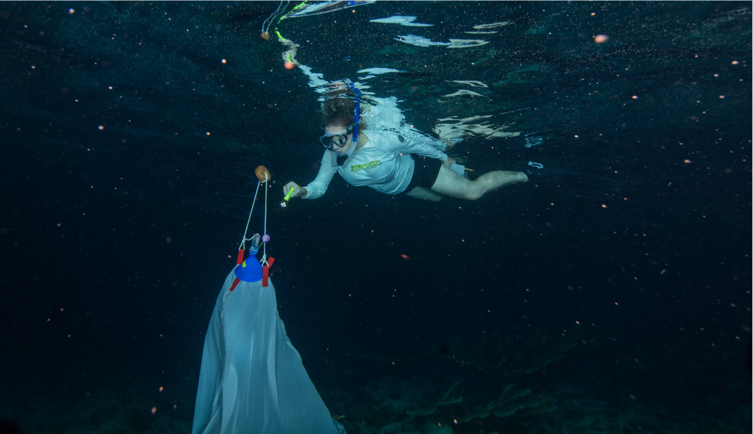 A snorkeller swimming toward a bag.