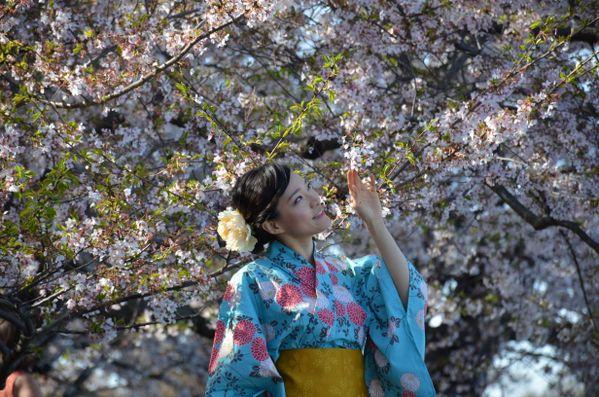 A beautiful girl in Kimono  thumbnail