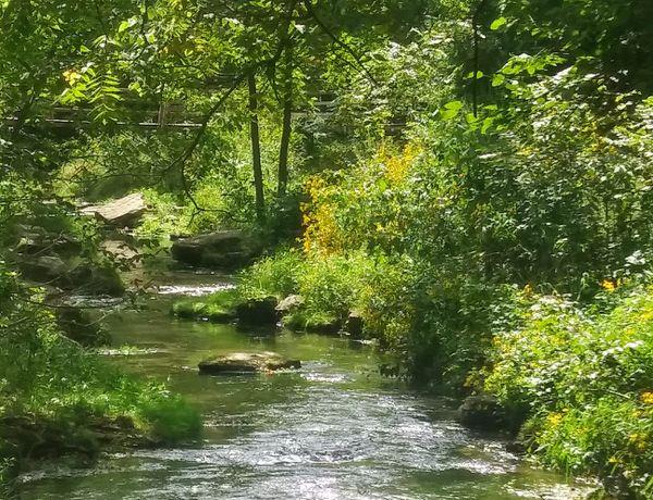 Peaceful stream thumbnail