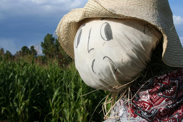 Scarecrow at Canon City, Colorado pumpkin patch thumbnail