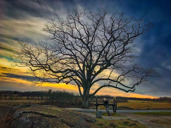 Gettysburg Devil's Den Witness Tree and Cannon thumbnail