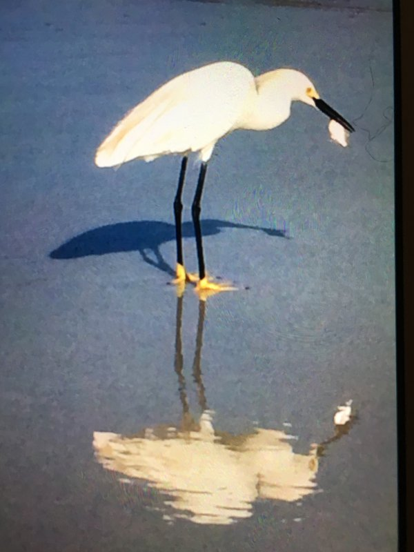 Egret And The Ghost thumbnail