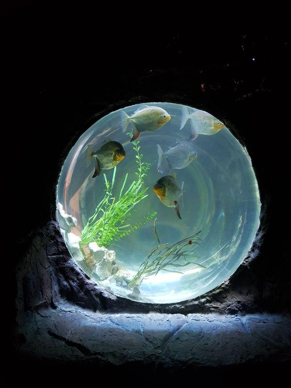 Fish in a tank thumbnail