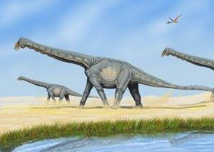 20110520083244800px-AlamosaurusDB-300x214.jpg