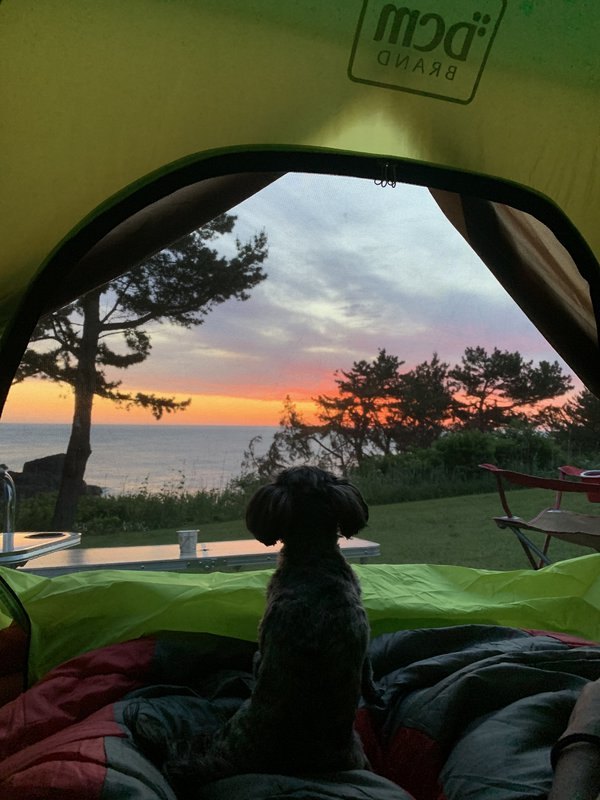 Dog Camping in Japan thumbnail