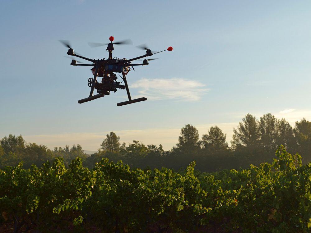 Drone in Vinyard